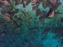 Τοπ άποψη των μεγάλων λίθων στο σαφές νερό κοντά στην ακτή Στοκ εικόνα με δικαίωμα ελεύθερης χρήσης