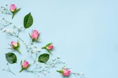 Τοπ άποψη των ρόδινων τριαντάφυλλων και των πράσινων φύλλων πέρα από το μπλε υπόβαθρο αφηρημένη ανασκόπηση floral διάστημα αντιγρ Στοκ Εικόνες