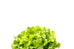 Τοπ άποψη των φύλλων σαλάτας, πράσινη βαλανιδιά στοκ φωτογραφίες με δικαίωμα ελεύθερης χρήσης