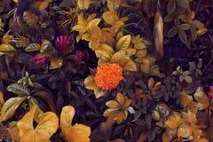 Τοπ άποψη φύλλων φθινοπώρου Πορτοκαλί κίτρινο φύλλο φθινοπώρου Εξωτική ψηφιακή απεικόνιση κήπων Φυσική διακόσμηση φύλλων Στοκ Φωτογραφία