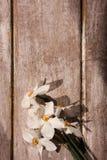 Τοπ άποψη Narcissuses όμορφο ύδωρ ήλιων άνοιξη λουλουδιών Στοκ εικόνες με δικαίωμα ελεύθερης χρήσης