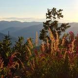 Τοπ λιβάδι βουνών στοκ φωτογραφία