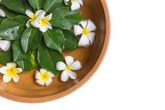 Τοπ κύπελλο νερού αργίλου άποψης με το άσπρο λουλούδι (plumeria ή frangipa Στοκ φωτογραφίες με δικαίωμα ελεύθερης χρήσης