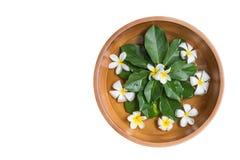 Τοπ κύπελλο νερού αργίλου άποψης με το άσπρο λουλούδι (plumeria ή frangipa Στοκ εικόνες με δικαίωμα ελεύθερης χρήσης
