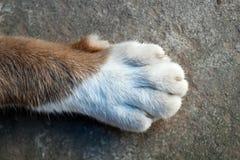 Τοπ πόδι άποψης του ποδιού γατών Στοκ Εικόνες