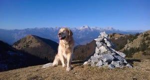 Τοπ σκυλί σε ένα βουνό Στοκ εικόνα με δικαίωμα ελεύθερης χρήσης