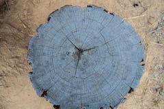 Τοπ υπόβαθρο σύστασης κολοβωμάτων δέντρων άποψης Στοκ Εικόνες