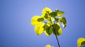 Τοπ φύλλο ενός δέντρου στοκ εικόνα