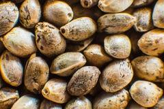Τοπ όψη Πολλοί σπόροι καννάβεων Μακρο λεπτομέρεια του σπόρου μαριχουάνα Υπόβαθρο σπόρων κάνναβης στη μακροεντολή Οργανικός σπόρος στοκ εικόνα με δικαίωμα ελεύθερης χρήσης