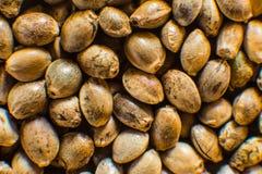 Τοπ όψη Πολλοί σπόροι καννάβεων Υπόβαθρο σπόρων κάνναβης στη μακροεντολή Μακρο λεπτομέρεια του σπόρου μαριχουάνα Οργανικός σπόρος στοκ φωτογραφία με δικαίωμα ελεύθερης χρήσης