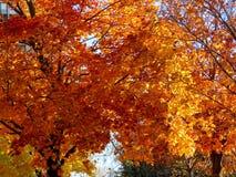 Τορόντο τα όμορφα δέντρα 2016 φθινοπώρου Στοκ εικόνες με δικαίωμα ελεύθερης χρήσης