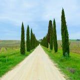 Τοσκάνη, άσπρο οδικό τοπίο δέντρων κυπαρισσιών, Ιταλία, Ευρώπη. στοκ εικόνα
