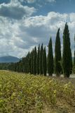 Τοσκάνη, Ιταλία, τοπίο με τα κυπαρίσσια στοκ φωτογραφία με δικαίωμα ελεύθερης χρήσης