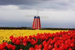 τουλίπα Στοκ φωτογραφία με δικαίωμα ελεύθερης χρήσης