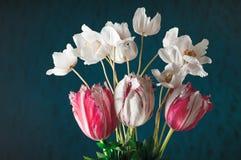 Τουλίπες και άσπρα anemones με τα πράσινα φύλλα Στοκ φωτογραφία με δικαίωμα ελεύθερης χρήσης
