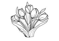 τουλίπες λουλουδιών Γραπτή εικόνα Χρωματισμός για τους ενηλίκους ελεύθερη απεικόνιση δικαιώματος