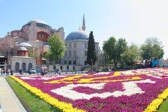 Τουλίπες μπροστά από Hagia Sophia, Ιστανμπούλ Στοκ Εικόνα