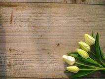 Τουλίπες στο ξύλινο υπόβαθρο με το διάστημα για το μήνυμα Υπόβαθρο ημέρας μητέρων ` s Τοπ όψη Ανασκόπηση ημέρας βαλεντίνων Στοκ Εικόνες
