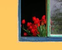 τουλίπες Στοκ εικόνες με δικαίωμα ελεύθερης χρήσης