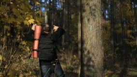 Τουρίστας ατόμων με το σακίδιο πλάτης πίσω, που περπατά μέσω των ξύλων απόθεμα βίντεο