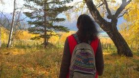 Τουρίστας γυναικών που περπατά το φθινόπωρο το δάσος την ηλιόλουστη ημέρα φθινοπώρου Ταξιδιωτική γυναίκα οδοιπόρων με σακιδίων πλ απόθεμα βίντεο