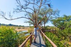 Τουρίστας που εξετάζει το πανόραμα με διοφθαλμικό από την άποψη πέρα από το φυσικού και ζωηρόχρωμου τοπίο ποταμών Olifants, με τη στοκ φωτογραφία με δικαίωμα ελεύθερης χρήσης