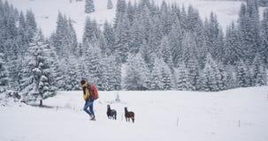 Τουρίστας που ερευνά τη θέση στην επαρχία βρήκε δύο άλογα στο χιονώδες δάσος στη μέση του βουνού απόθεμα βίντεο
