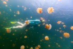 Τουρίστας που κολυμπά με αναπνευτήρα στη λίμνη μεδουσών Στοκ Εικόνες