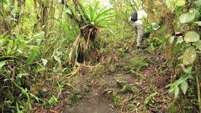 Τουρίστας που περπατά επάνω στο τροπικό δάσος απόθεμα βίντεο