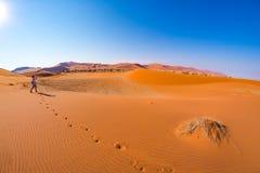 Τουρίστας που περπατά στους αμμόλοφους άμμου σε Sossusvlei, έρημος Namib, εθνικό πάρκο Namib Naukluft, Ναμίμπια Διακινούμενοι άνθ Στοκ Φωτογραφία