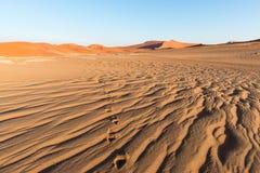 Τουρίστας που περπατά στους φυσικούς αμμόλοφους Sossusvlei, έρημος Namib, εθνικό πάρκο Namib Naukluft, Ναμίμπια Φως απογεύματος ρ Στοκ Εικόνα