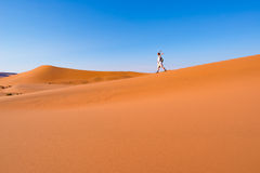 Τουρίστας που περπατά στους φυσικούς αμμόλοφους Sossusvlei, έρημος Namib, εθνικό πάρκο Namib Naukluft, Ναμίμπια Περιπέτεια και εξ Στοκ Εικόνα