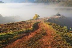 Τουρίστας φυτειών τσαγιού στοκ φωτογραφία με δικαίωμα ελεύθερης χρήσης