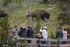 Τουρίστες και άγρια φύση Στοκ εικόνα με δικαίωμα ελεύθερης χρήσης