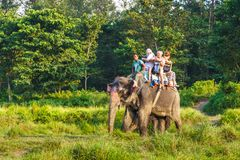 Τουρίστες που επισκέπτονται τη ζούγκλα στις πλάτες των ελεφάντων Στοκ Εικόνες