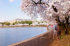 Τουρίστες που παίρνουν τις εικόνες των ανθών κερασιών Στοκ φωτογραφία με δικαίωμα ελεύθερης χρήσης