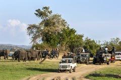 Τουρίστες που παίρνουν τις φωτογραφίες ενός κοπαδιού των ελεφάντων που βόσκουν δίπλα στη δεξαμενή στο εθνικό πάρκο Minneriya στη  στοκ εικόνα με δικαίωμα ελεύθερης χρήσης