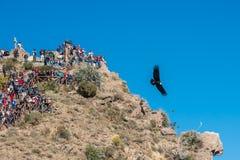 Τουρίστες που προσέχουν τους κόνδορες στο φαράγγι Arequipa Περού Colca Στοκ φωτογραφία με δικαίωμα ελεύθερης χρήσης