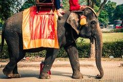 Τουρίστες σε έναν elefant γύρο γύρω από το πάρκο σε Ayutthaya, Thaila Στοκ εικόνες με δικαίωμα ελεύθερης χρήσης
