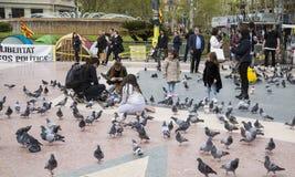 Τουρίστες σε Plaza Catalunya στη Βαρκελώνη που ταΐζει τα περιστέρια και που παίρνει τις εικόνες τους Στοκ Εικόνες