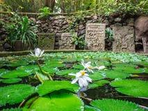 Τουριστικό αξιοθέατο, παλαιά λίμνη με το λωτό στους διάσημους ναούς στην Ταϊλάνδη Στοκ Φωτογραφία