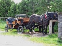 Τουριστικό συρμένο άλογο αμαξάκι Στοκ φωτογραφία με δικαίωμα ελεύθερης χρήσης