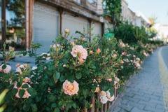 Τουρκία, Cappadocia, Goreme, στις 12 Ιουνίου 2017: Ηλιόλουστο πρωί σε Goreme - οδός με τα λουλούδια και τα κλειστά καταστήματα κα Στοκ Εικόνες