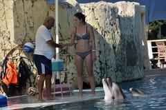 Τουρκία, Kemer, 05.08.2017 που λούζει με τα δελφίνια κάτω από το superv Στοκ Εικόνα