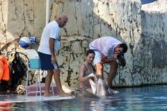 Τουρκία, Kemer, 05.08.2017 που λούζει με τα δελφίνια κάτω από το superv Στοκ Εικόνες