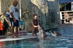 Τουρκία, Kemer, 05.08.2017 που λούζει με τα δελφίνια κάτω από το superv Στοκ Φωτογραφία