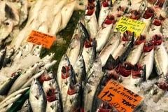 Τουρκικά ειδικά ψάρια Palamut κάτω από το μετρητή ψαράδων Στοκ Εικόνα
