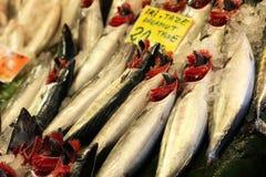 Τουρκικά ειδικά ψάρια Palamut κάτω από το μετρητή ψαράδων Στοκ Εικόνες