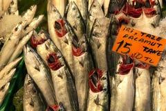 Τουρκικά ειδικά ψάρια Palamut κάτω από το μετρητή ψαράδων Στοκ εικόνες με δικαίωμα ελεύθερης χρήσης