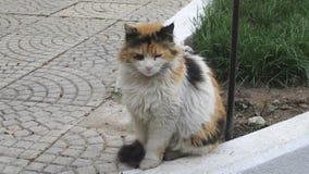 Τουρκική γάτα Στοκ φωτογραφία με δικαίωμα ελεύθερης χρήσης